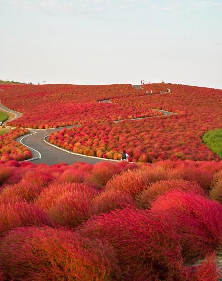 Parque Hitachi Seaside, Japón