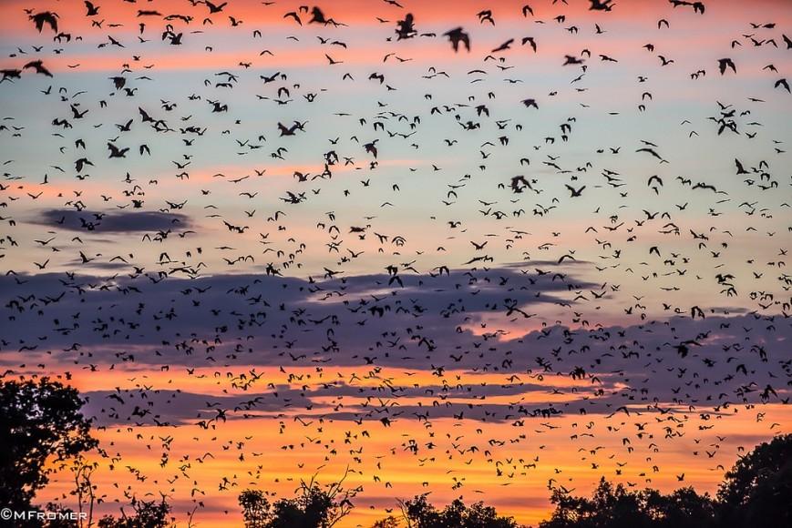 Murcielagos